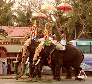 Ceremonial elephants