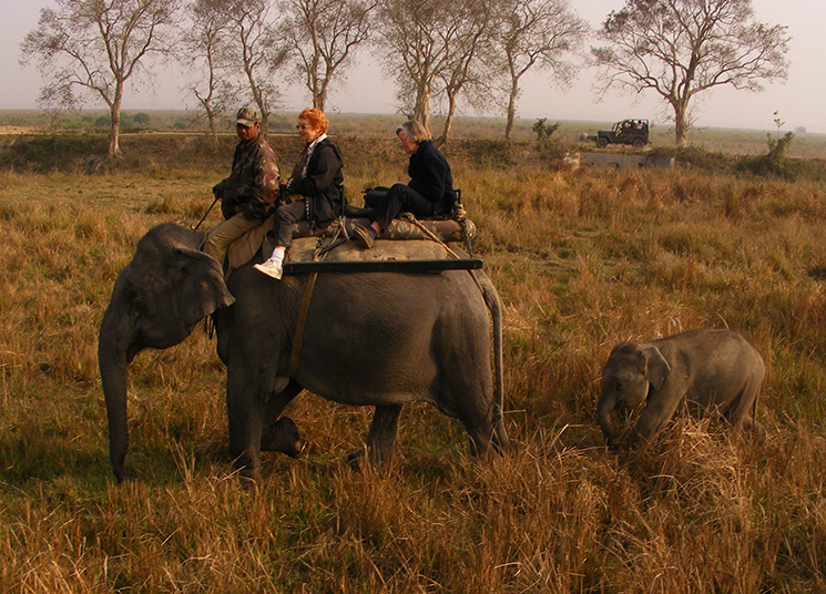 Elephant safari in Kaziranga India